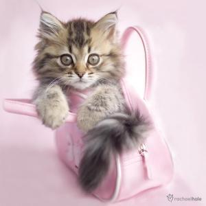 Bienvenue sur le blog de kim page 31 - Image de petit chat ...